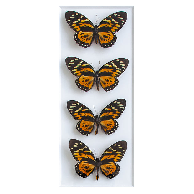 CUADRO HOME DECOR DE 4 MARIPOSAS   sku:34882