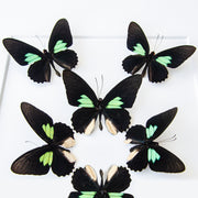 CUADRO HOME DECOR CON 8 MARIPOSAS   sku:36671