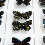 CUADRO HOME DECOR CON 18 MARIPOSAS   sku:36685