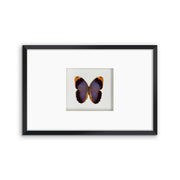 CUADRO HOME DECOR CON 1 MARIPOSA   sku:35324