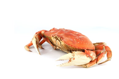 Dungeness Crab, Whole, Fresh Cooked (Local) - avg 1.5 lbs