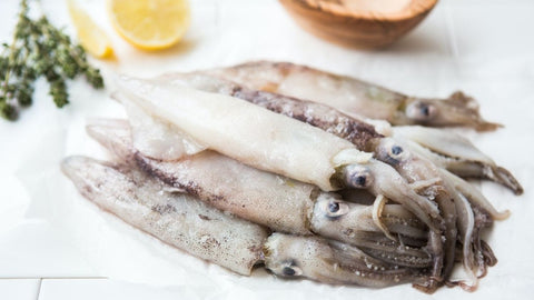 Monterey Squid/California Loligo