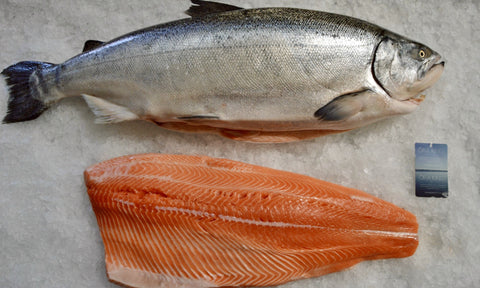 Salmon Side, Ora King (skin on, pine bones out, ~5 lbs @ $25.99/lb)