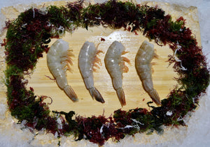 Shrimp - Baja White Shrimp, 16/20, Shell On, Frozen (Mexico) - 2.2 lb