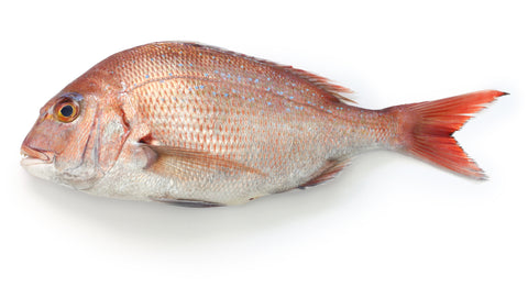 Tai Snapper - Whole (NZ) - avg 2.5 lb