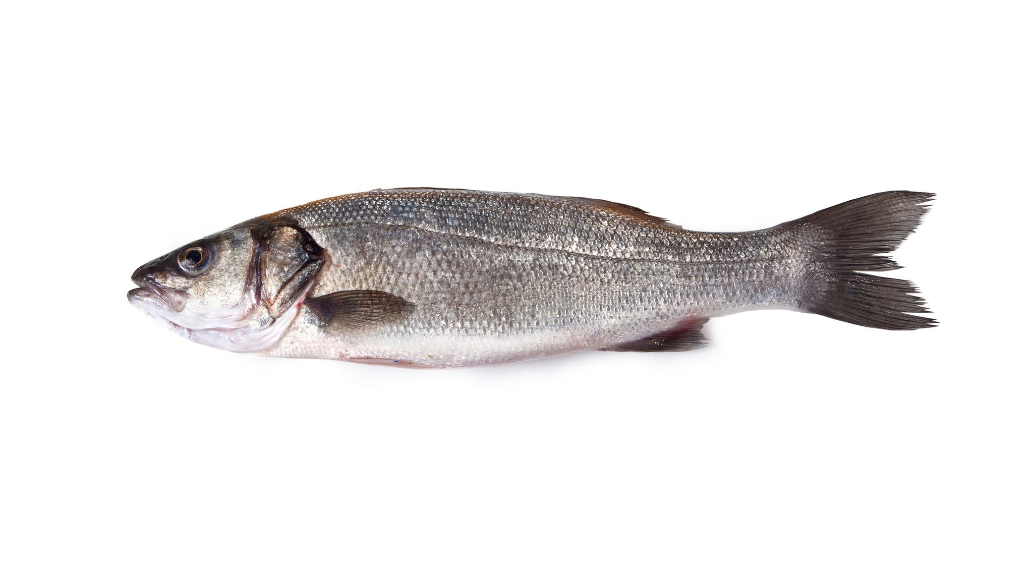 Branzino - Whole, Scaled, Cleaned (Local) - avg 1 lb