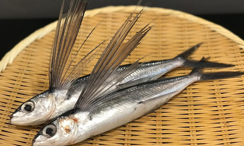 Tobiuo (飛魚 / Flying Fish) (2pc/order)