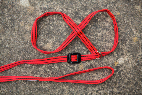 Gencon - All-In-1 Dog Headcollar & Lead In One - Red/Black