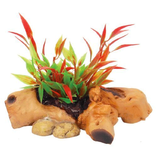 Fadulla - Driftwood with Plant