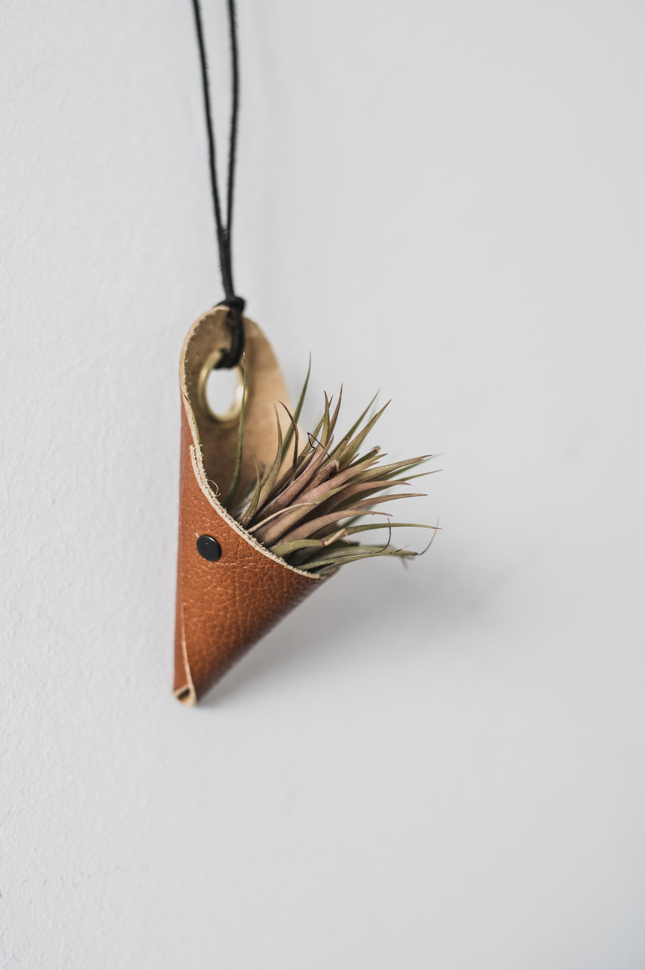Airplant hanger