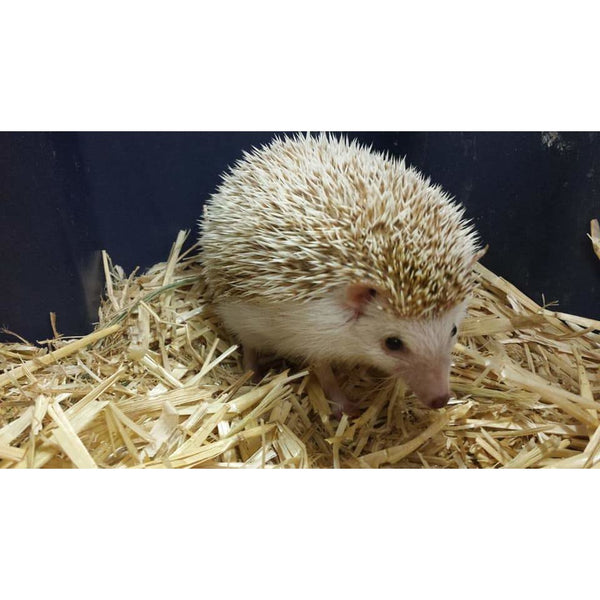 Hedgehog/Deposit ~ Click for more info