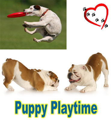 FREE PUPPY PLAYTIME