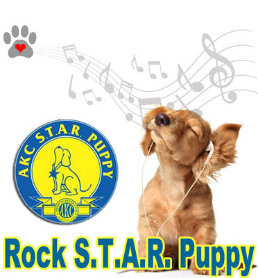 ROCK STAR ~ S.T.A.R Puppy