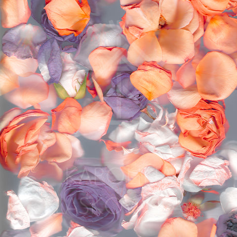 Roses Orange Silk Modal Scarf With Eyelash Hem