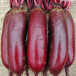 Red Beetroot 'Cylindra' - 100 Seeds