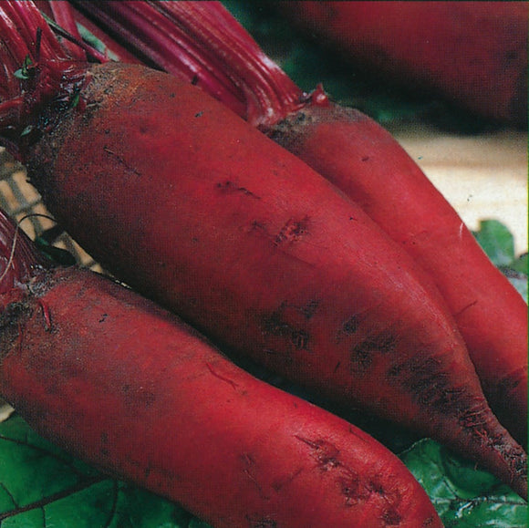 Red Beetroot 'Forono' - 100 Seeds