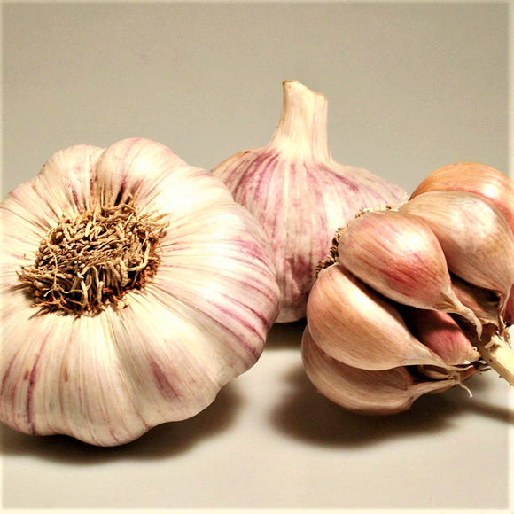 3 x Seed Garlic Bulbs 'Casablanca' (Av. ±30 Cloves)