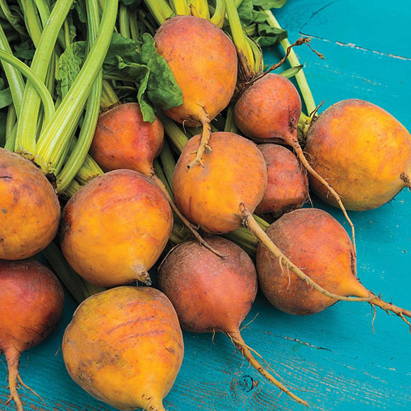 Golden Beetroot 'Boldor F1' - 100 Seeds