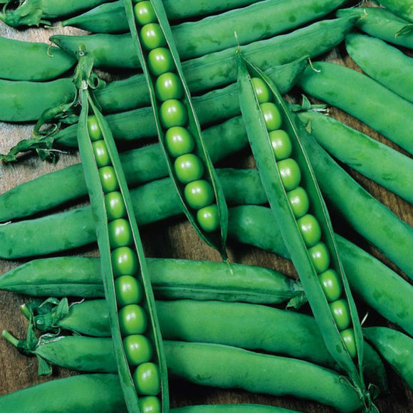 Hurst Green Shaft - 35 Seeds - Garden Peas