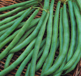 Annabel - 35 Seeds - Dwarf French Beans