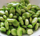 Aquadulce Claudia - Autumn or Spring Planting Broad Beans - 35 Seeds