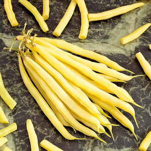 Cala d'Or - 25 Seeds - Dwarf French Beans