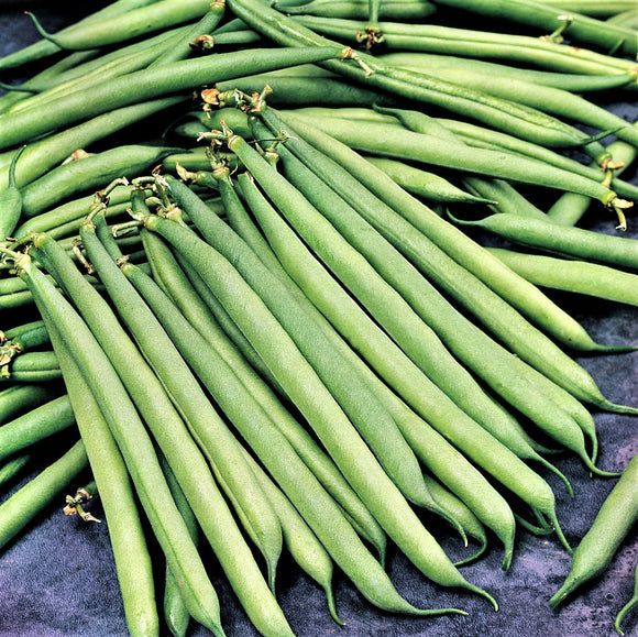 Faraday - 35 Seeds - Dwarf French Beans