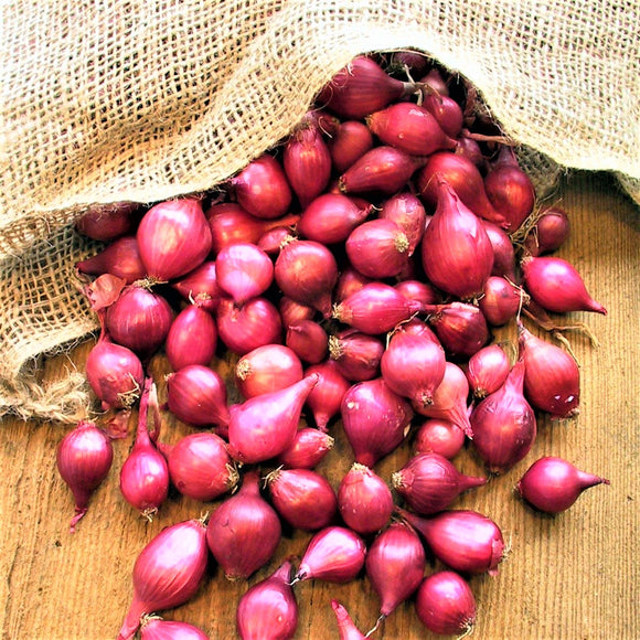 Red Karmen Onion Sets - Autumn or Spring Planting