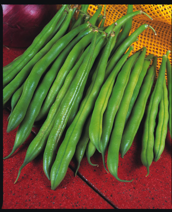 The Prince - 35 Seeds - Dwarf French Beans