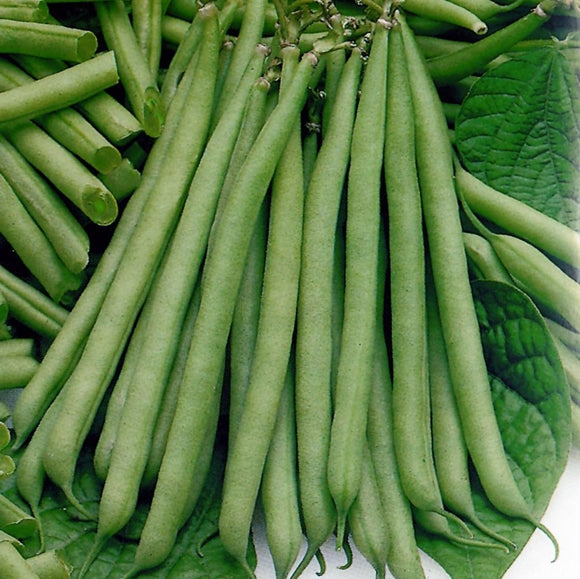 Slenderette - 35 Seeds - Dwarf French Beans