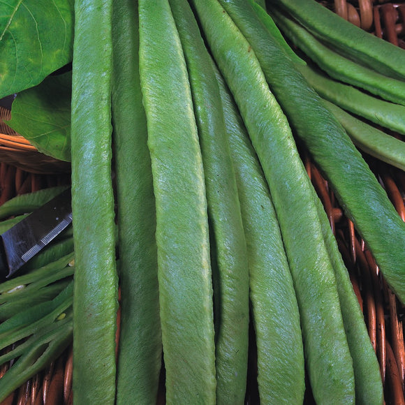 Streamline Runner Beans - 25 Seeds