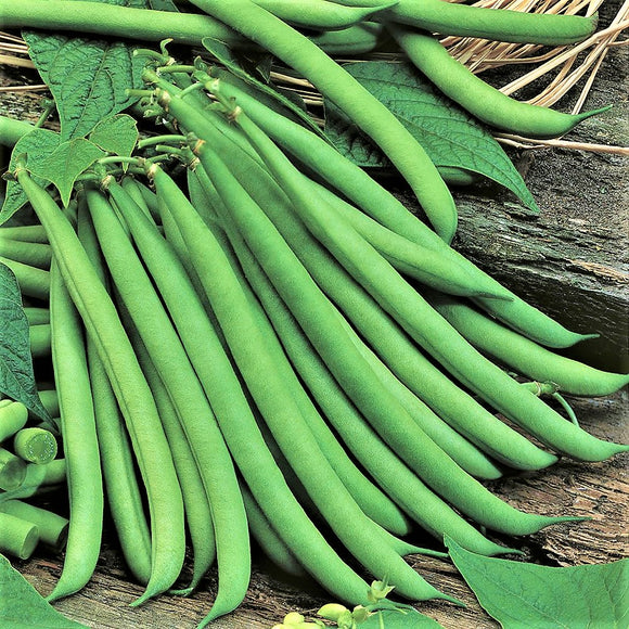 Tendercrop - 35 Seeds - Dwarf French Beans
