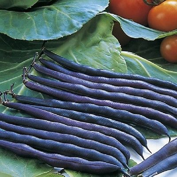 Purple Teepee - 25 Seeds - Dwarf French Beans