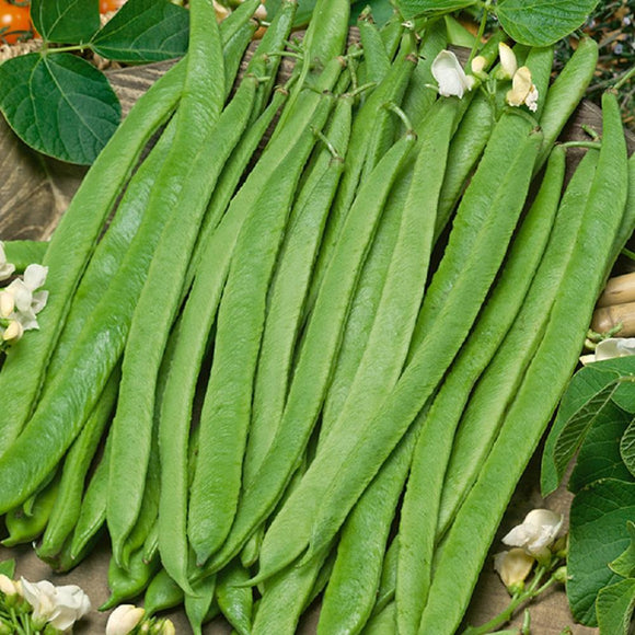 White Emergo Runner Beans - 25 Seeds