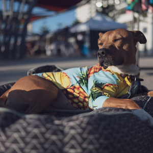 Open image in slideshow, Matching owner & dog Hawaiian Shirts
