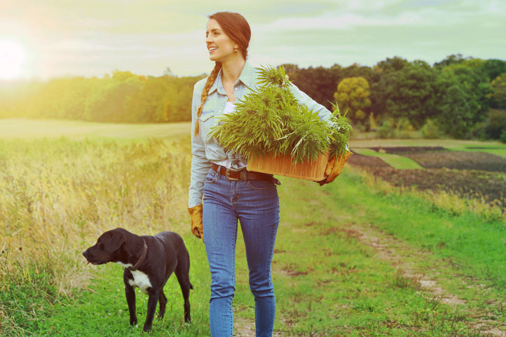 Girl and dog walking in natural sunlit field. She is carrying a basket of natural hemp.