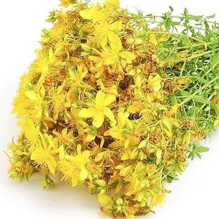 St Johns Wort Infused in Sunflower Oil