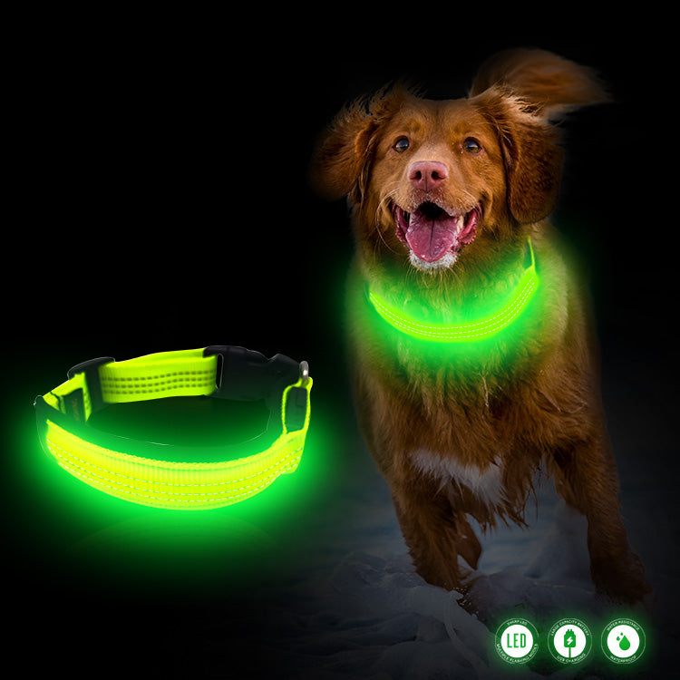 Padded LED Dog Collar