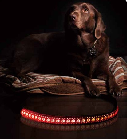 Red LED Dog Lead with Paw Print