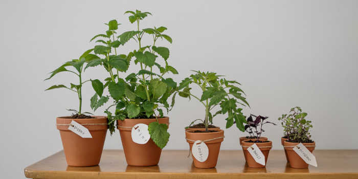 Save Money Grow Your Own Herbs