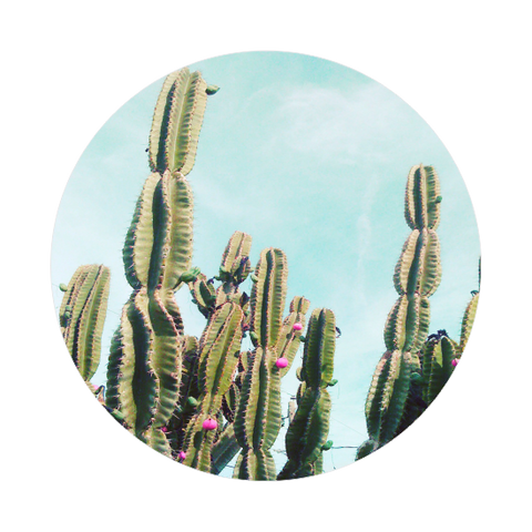 Key Ring - Cactus