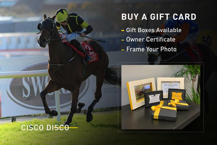 Cisco Disco Racehorse Gift Card - Horseracing Syndicates - horse racing gifts