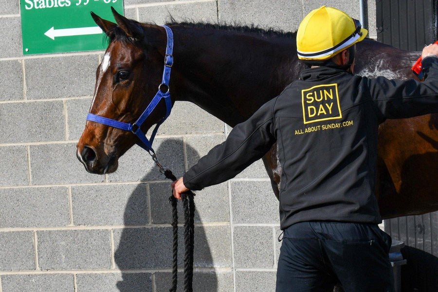 Racehorse Sunday Special- Horse Racing Syndicate - Ownership Shares Available - Sunday Racing - allaboutsunday