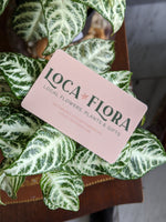 Physical Gift Card | LOCAFLORA