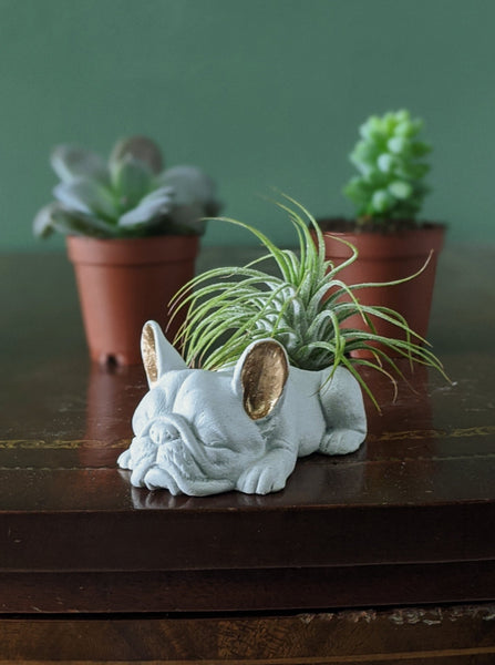 Concrete Frenchie Planter | White with Gold Ears