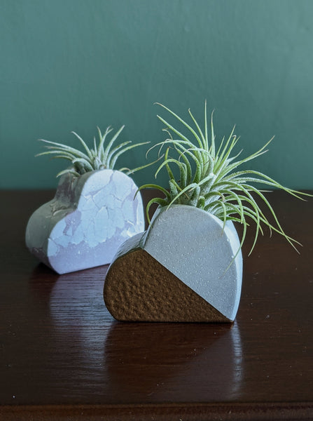 { True Love } Heart Air Plant Holder | White and Gold | Valentine's/Galentine's Exclusive