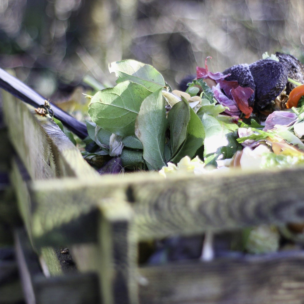 Why We Should Reduce Our Food Waste At Home