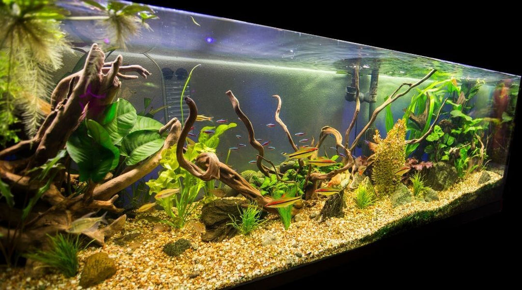 10 Common Freshwater Aquarium Problems and How to Solve Them