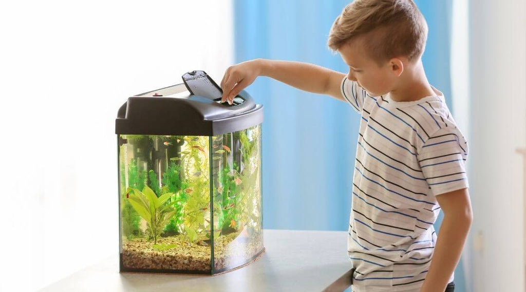 Choosing the best location to set up your aquarium