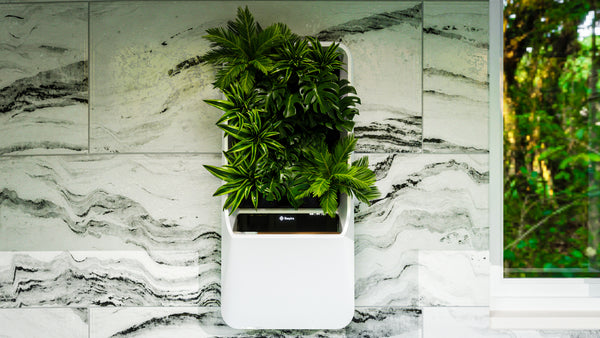 Choosing a Green Wall for Your Home